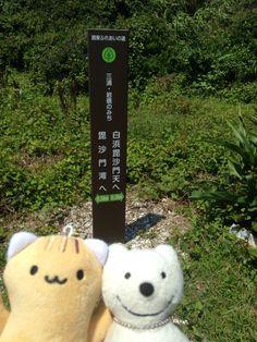 クマ散歩:三浦・岩礁のみちに品行方正なクマ出没 (毘沙門湾 Bishamon Bay) The Bear took a walk along Miura Reef!♪☆(^O^)/  #品行方正 #Bear #三浦