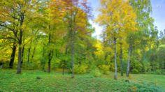 One year in 40 seconds on Vimeo - Dans une vidéo réalisée en 2009, Eirik Solheim propose de suivre l''évolution d'une forêt pendant une année entière.