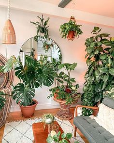 """I Plant Even on Instagram: """"It's a jungle out there. (via @themacramejungle)"""" Tropical Plants, Plant Decor, House Plants, Succulents, Planters, Indoor, Garden, Inspiration, Instagram"""