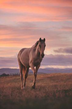 saisirlesjour Cute Horses, Pretty Horses, Horse Love, Equine Photography, Wildlife Photography, Animal Photography, Photography Tips, Photography Courses, Iphone Photography