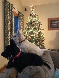 Piper and Millie getting into the Christmas spirit while watching the snow fall.