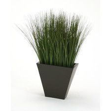 Silk Grass in Planter
