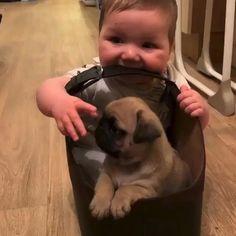 Cute Pug Puppies, Super Cute Puppies, Cute Funny Babies, Cute Pugs, Doggies, Cute Kawaii Animals, Cute Funny Animals, Cute Baby Animals, Baby Pugs