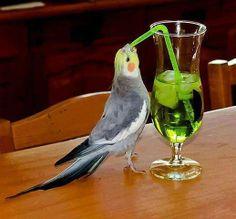 It's my drinks......