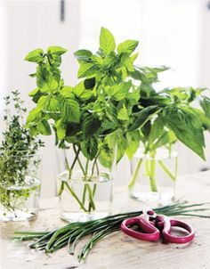Fresh herbs keep longer- (and look beautiful!) in vases or drinking glasses with water