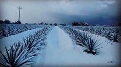 ¿La causa? La unión de una tormenta invernal con dos frentes fríos.   17 Hermosas imágenes de las nevadas en México que te dejarán frío