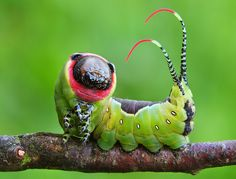 I LOVE this picture. If you look closely, the caterpillar is smiling and posing for the camera!