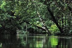 Brunei Jungle