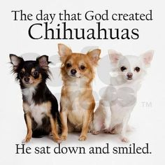 The day that God created Chihuahuas, He sat down and smiled...