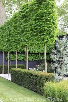 s ulenf rmige b ume f r schmale g rten garden pinterest schmaler garten schmal und baum. Black Bedroom Furniture Sets. Home Design Ideas
