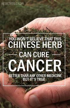 As an answer from nature to this paralyzing issue, a rare Chinese herb with incredible healing properties came into the light. According to the studies which were published in Life Sciences, Cancer Letters and Anticancer Drugs, artemisinin is the miracle herb which is known to kill a whopping 12,000 cancer cells for every healthy cell. Artemisinin is a derivative of the wormwood plant which is popularly used in Chinese medicine.