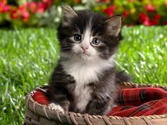 ... wallpaper, Spring Kitten Background hd wallpaper, background desktop