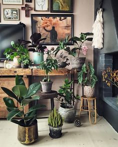 Eclectic plant gang; but I like it!