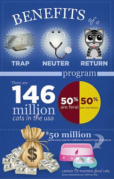 Do you want to know more about the benefits of Trap-Neuter-Return (TNR) programs? Check out our comprehensive TNR guide and share our helpful infographic with your community. Short Legged Cats, Hairless Kitten, Cats That Dont Shed, Purebred Cats, No Kill Animal Shelter, Cats And Cucumbers, Cat Info, Cats Musical, Cat Drinking