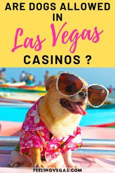 Are Dogs Allowed in Las Vegas Casinos? Las Vegas Tips, Visit Las Vegas, Vegas Casino, Las Vegas Hotels, Las Vegas Airport, Paris Las Vegas, Monte Carlo Travel, Dog Friendly Hotels