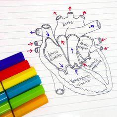 """1,249 curtidas, 19 comentários - Médica Leitora (@medicaleitora) no Instagram: """"Resumo sobre coração humano. Como é fascinante descobrir cada estrutura do nosso corpo... Ótimo dia…"""""""