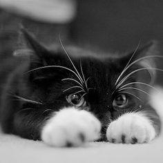 Cute kitten.....