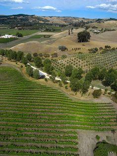 Havelock North, Hawke's Bay, New Zealand Havelock North, Tropical Heat, New Zealand Landscape, Wine Vineyards, Road Trips, Cloud, Colorado, Landscapes, Destinations
