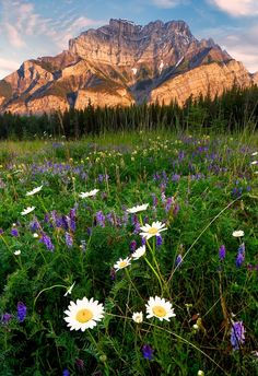 Cascade Meadows Sunrise by Michael James on 500px