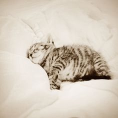 """""""A kitten provides a child with a sleepover friend every night."""" --Jo Kittinger"""