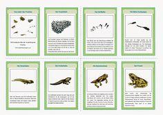 So, auch die Froschbilder sind fertig. Ebenfalls im Album Tiere zu finden.   Frosch - Lesekarten   Frosch - Lebenskreis
