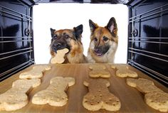 Paws – Homemade treats for dogs with arthritis and diabetes