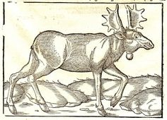 1558 OSTPREUSSEN PREUSSEN KÖNIGSBERG POLSKA COSMOGRAPHIA 4 HOLZSCHNITTE WOODCUTS