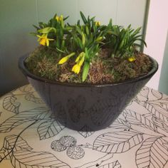 Potted arrangements, a speciality at The Courtyard Gardener.