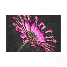 African Daisy Flower - Purple Canvas Wall Art Stretched Canvas Prints