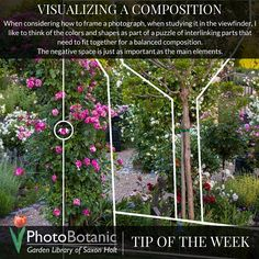Photography Tip of the Week: Visualizing a Composition | full tip online at: http://photobotanic.com/visualizing-a-composition | #photography #photographyhowto #howto