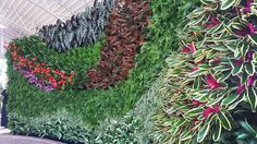 Florafelt Vertical Garden By Terra Garden.