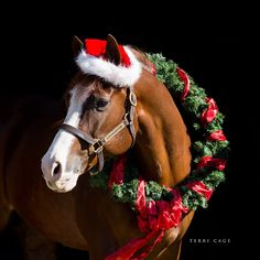 113 more days till Christmas! I will start equine Christmas photos Mid-October. Send me a message to book a mini session! Horse Girl Photography, Equine Photography, Animal Photography, Cute Horses, Horse Love, Beautiful Horses, Cute Horse Pictures, Horse Photos, Christmas Horses