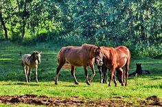 MYSLIVOST: UŽ MĚ KONĚ VYVÁDĚJÍ...možná větší láska než mysliv... Celine Dion, Horses, Animals, Animales, Animaux, Animal, Animais, Horse