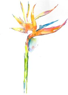 Bird of paradise watercolor...would make a beautiful tattoo