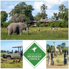Mombo has been included in Andrew Harper Travel's Hideaway Report 2018 Members' Choice Awards in the Most Spectacular Wildlife Experience category. Okavango Delta, Game Reserve, Choice Awards, Wilderness, Safari, Wildlife, Southern, Africa