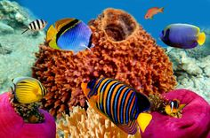 Coral Reef Wallpaper For Windows #z8m