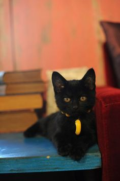 """""""if A Black Cat Crosses Your Path, It Means The Animal Is Going Somewhere."""" --groucho Marx"""
