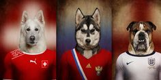 World Cup: Dogs in National Football Team Jerseys