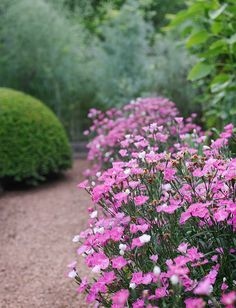 Dianthus adds color along a path. Gorgeous Garden at a Historic Home | Traditional Home