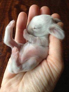 a newborn bunny ♥