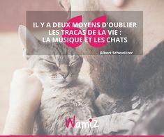 """""""Il y a deux moyens d'oublier les tracas de la vie : la musique et les chats"""" Albert Schweitzer, Exactement, Animal Quotes, Animals, Inspiration, Kitty Cats, Cat Sayings, Famous Qoutes, So True"""