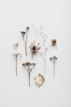 Love this little seed head collection! #flatlay
