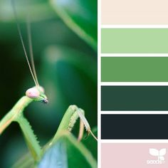 today's inspiration image for { color creature } is by @thebungalow22 ... thank you, Steph, for another fresh + inspiring #SeedsColor image share!