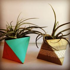 Make your own Succulent Vase using a leftover cereal box.