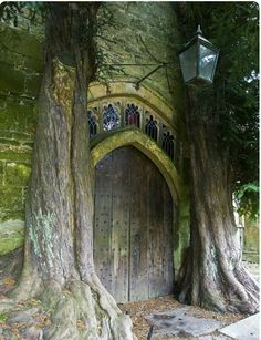 Beautiful portal, looks like it goes into another dimension , maybe a fairytale enchanted land