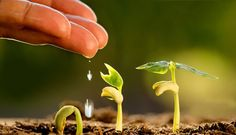 Get the best BSc in Agriculture & Horticulture Courses in India by Dolphin College. Visit us to find B Sc agriculture colleges course & B Sc agri details. Organic Gardening, Gardening Tips, Faire Son Compost, Effects Of Global Warming, Potager Bio, Plant Background, Plantation, Planting Seeds, Green Backgrounds
