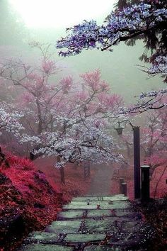 Ideas Spring Nature Photography Trees Scenery For 2019 Beautiful World, Beautiful Images, Beautiful Nature Wallpaper, Landscape Photography, Nature Photography, Nature Pictures, Belle Photo, Amazing Nature, Pretty Pictures