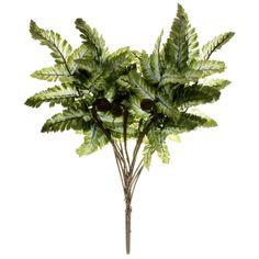 Buy the Pictum Fern Bush by Ashland® at Michaels