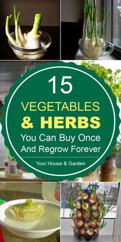 Herbs You Can Buy Once And Regrow Forever 15 Vegetables And Herbs You Can Buy Once And Regrow Vegetables And Herbs You Can Buy Once And Regrow Forever Indoor Vegetable Gardening, Home Vegetable Garden, Fruit Garden, Edible Garden, Organic Gardening, Gardening Tips, Herbs Garden, Herb Garden Design, Herb Garden Indoor