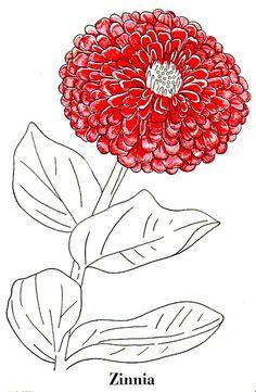 zinnias fill my dreams